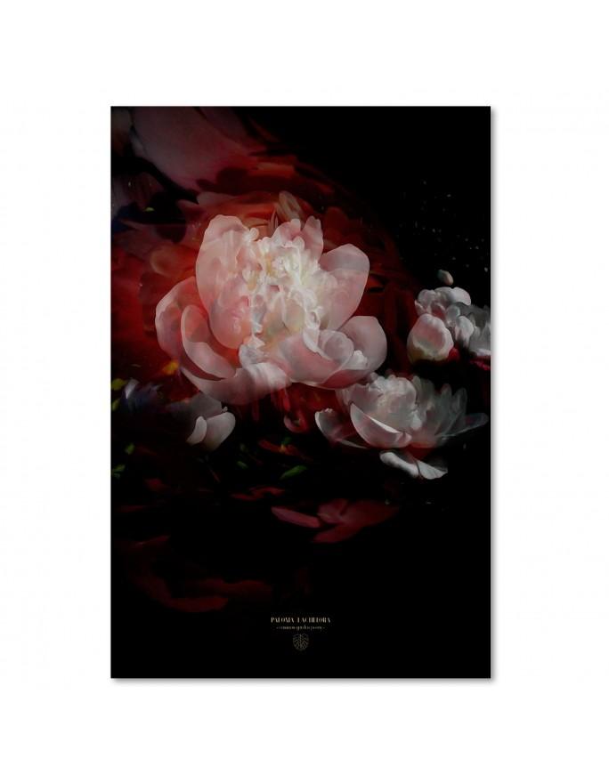 Koliber 2, Parawan pokojowy na płótnie - Canvas